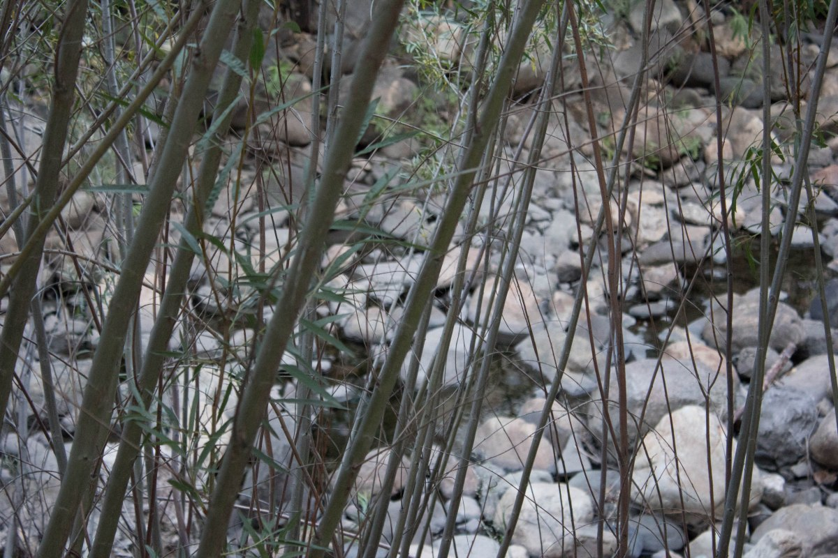 Branches and Rocks